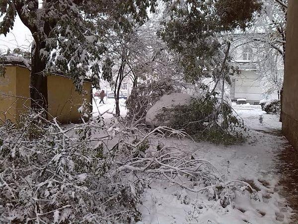 Banja Luka: Grane polomljene pod teretom snijega (FOTO)