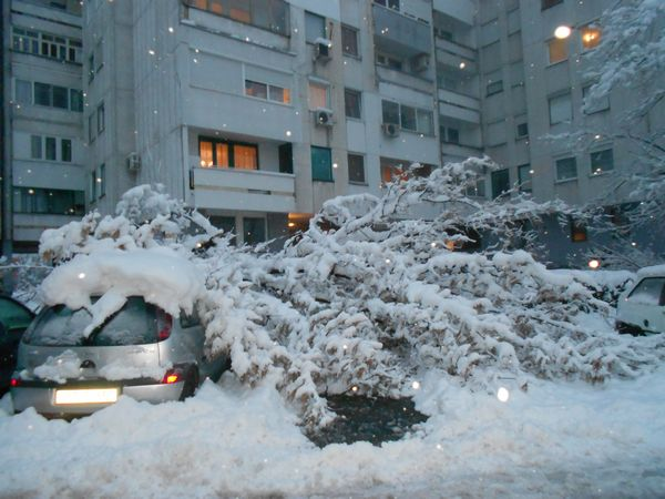 Snijeg oborio stablo u Boriku (FOTO)
