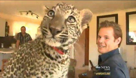 Lavovi i leopardi kao kućni ljubimci
