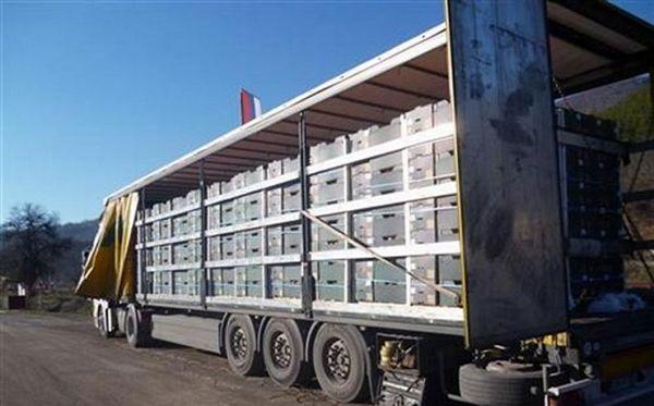 GP Vardište: U kamionu sa narandžama pronađeni ilegalni migranti