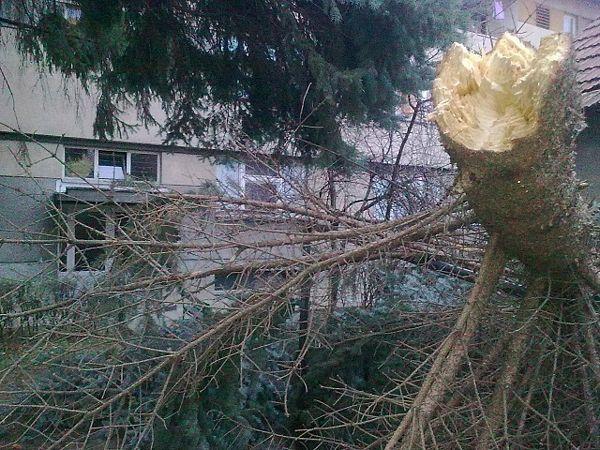 Ulica Braće Jugovića: Stablo palo – ko je odgovoran da ga ukloni? (FOTO)