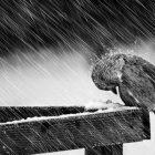 Životinje i zima (FOTO)