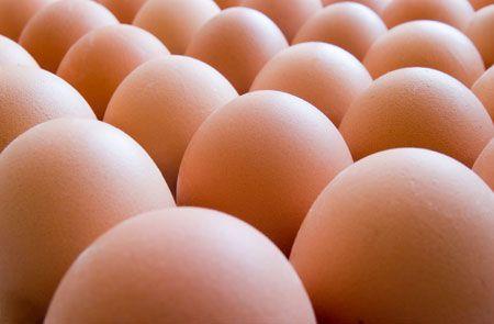 Za domaće potrebe proizvodi se dovoljno mlijeka, jaja, živinskog mesa…