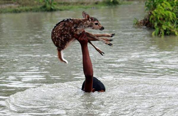 Zadivio svijet: Dječak rizikovao život da bi spasio lane iz poplave