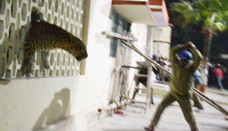 Leopard terorisao stanovnike grada u Indiji