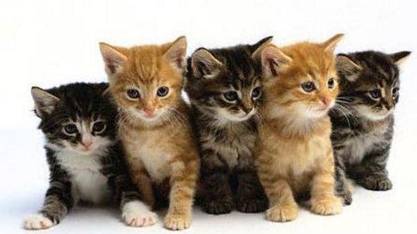Snaga mačkinog predenja: Šta nam sve liječi?