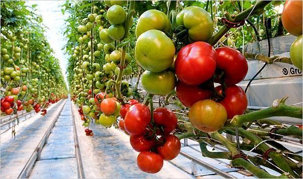 Besplatna obuka u Poljoprivrednoj školi: Naučite proizvoditi hranu