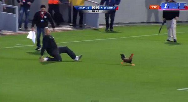 Pijetao na terenu prekinuo utakmicu (VIDEO)