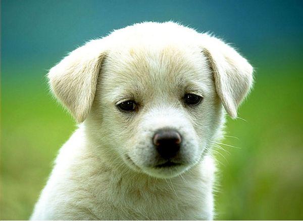 U prošloj godini udomljen 151 pas