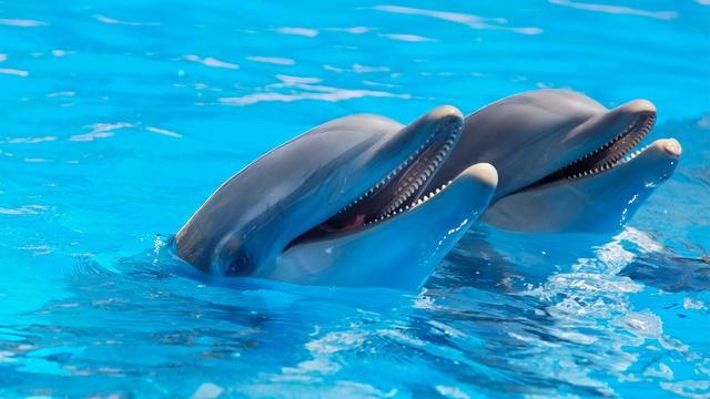 Delfini: Činjenice koje možda niste znali