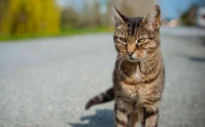 Doboj: Gađao mačku, ranio poznanika