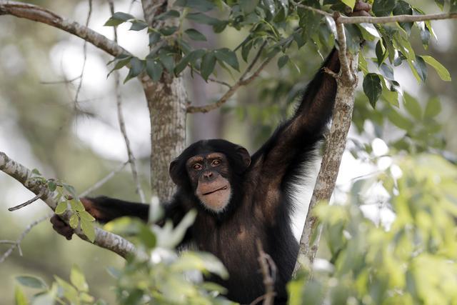 """""""Šimpanze treba proglasiti osobama"""""""