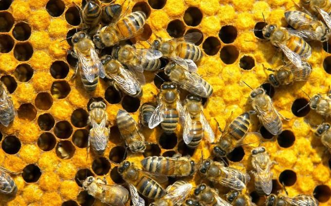 Misterija: Nestale pčele u Modriči