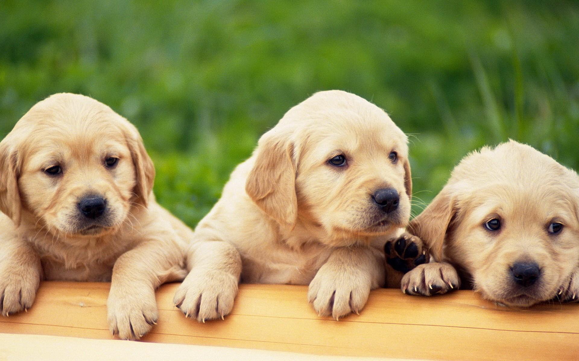 9 neobičnih savjeta za sve vlasnike pasa