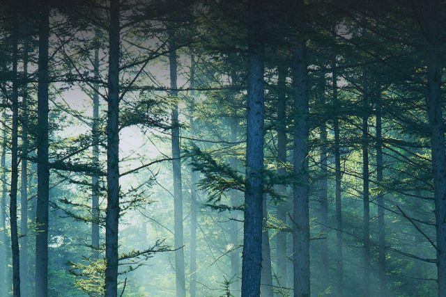 Ljudi koji žive blizu drvoreda i parkova koriste mnogo manje anti-depresiva