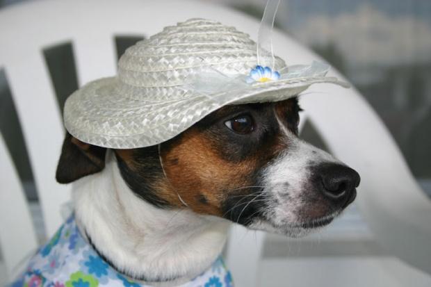 11 stvari koje vaš pas ne voli da mu radite