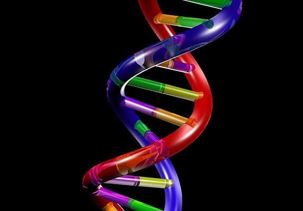 Britanija prva u svijetu odobrila začenje sa tri različita DNK