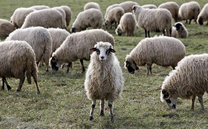 Lider Hongkonga: Narode, ugledaj se na ovce