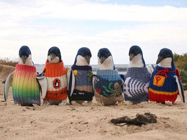 Najstariji Australijanac (109)  plete džempere za pingvine