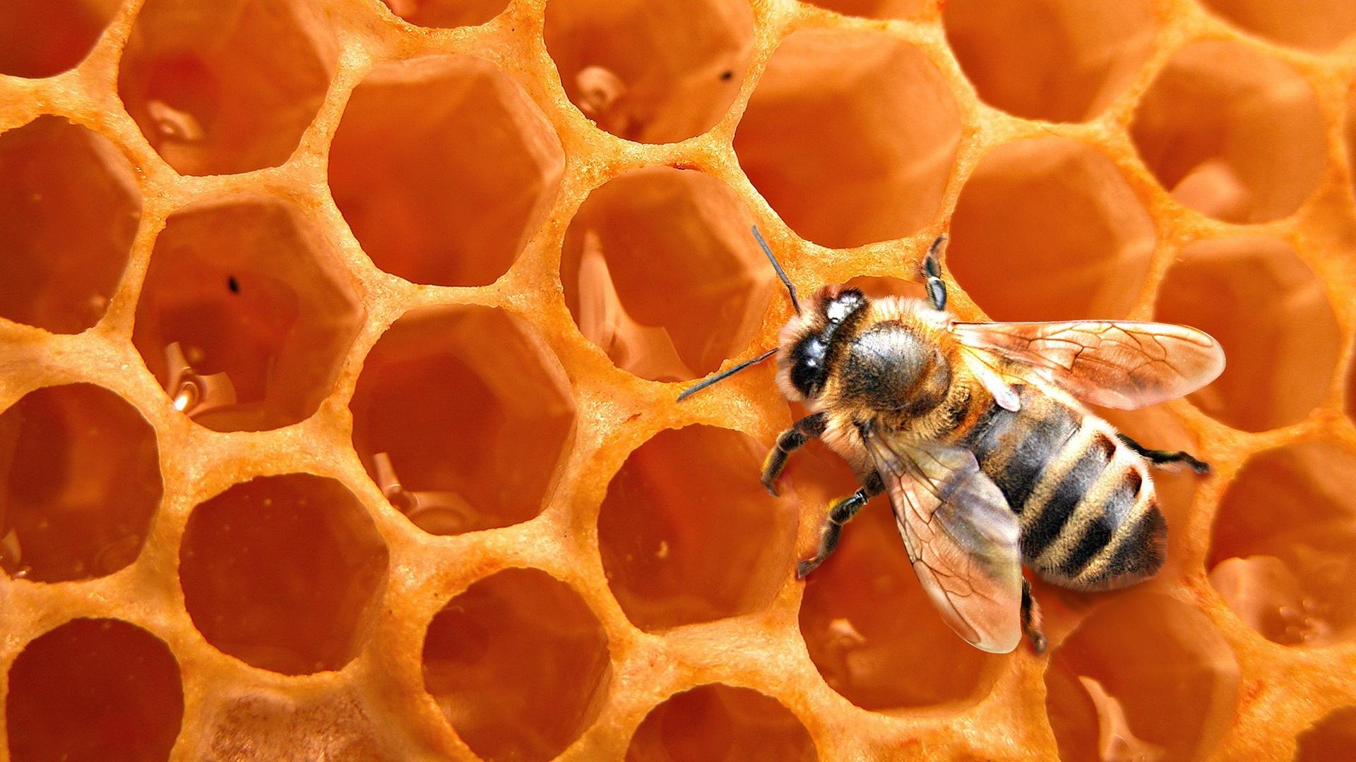 Za jednu kašiku meda 12 pčela radi cijeli život