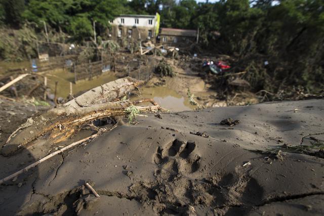 Tbilisi: Lav koji je pobjegao nakon poplava, ubio čovjeka
