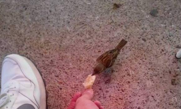 Vrabac sa Trga Kraji se sprijateljio s ljudima