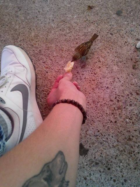 Vrabac 2
