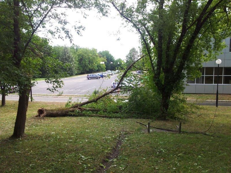 Laktaši: Nevrijeme iščupalo drvo u parku