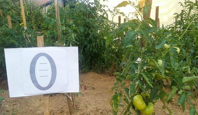 Humanisti iz Banjaluke gaje povrće za siromašne sugrađane