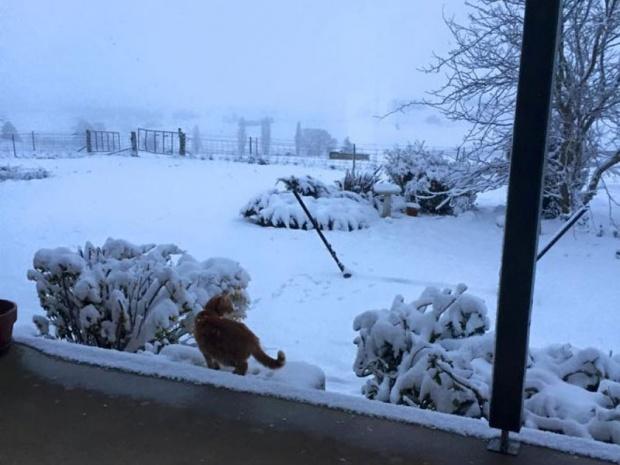 Mladi iznenađeni: U Australiji pada snijeg nakon 30 godina