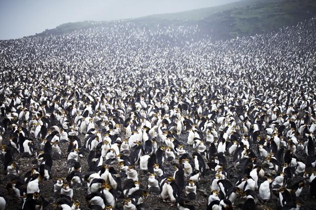 Ostrvo kojim vlada armija od 4 miliona pingvina (FOTO+VIDEO)