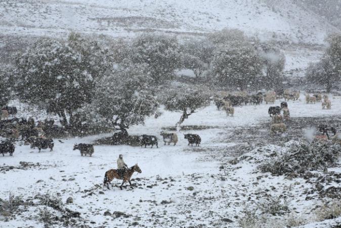 Pao snijeg