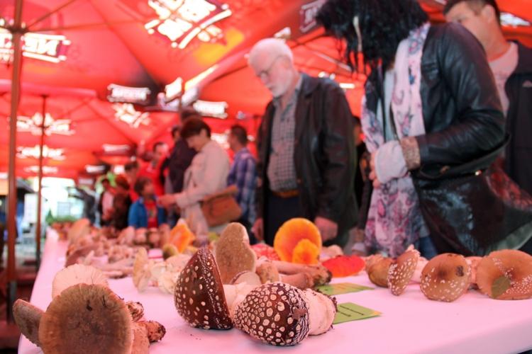 Gljiva s Novog Zelanda stigla i do Banjaluke (FOTO)