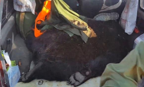 Kako je završio medo: Meso lovcima, ostatak na PMF-u