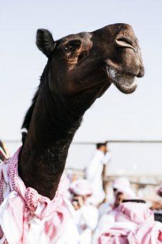 kamila 6