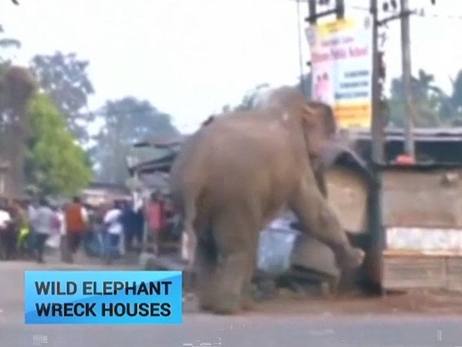 Indija: Podivljali slon porušio 100 kuća u selu (VIDEO)