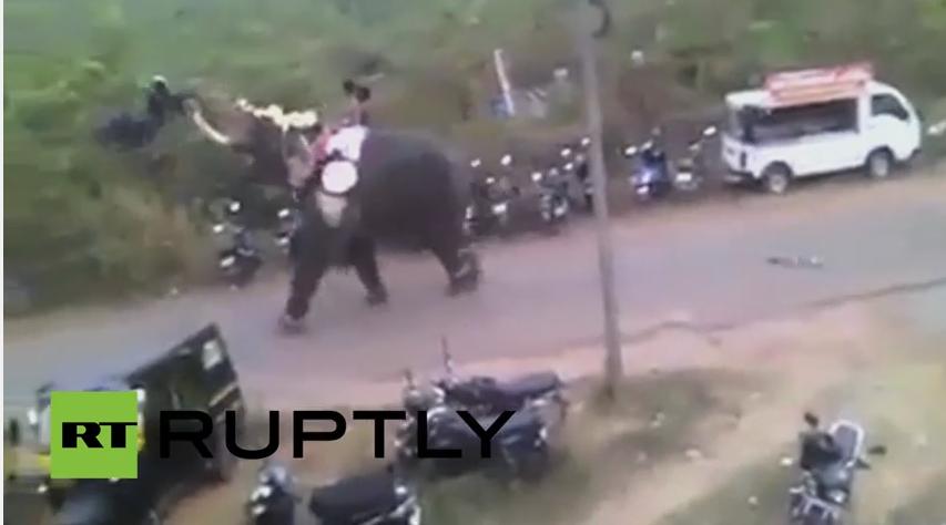 Slon se oslobodio pa uništio desetak parkiranih vozila