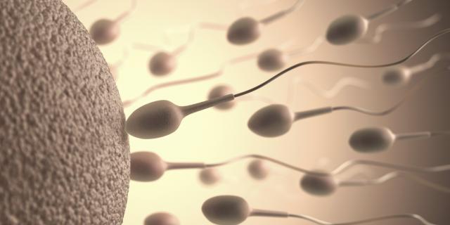 Naučnici napravili spermatozoide u laboratoriji