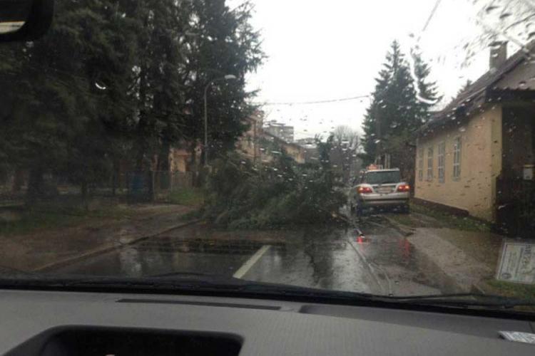 Jako nevrijeme zahvatilo Banjaluku: Padalo i drveće (FOTO)