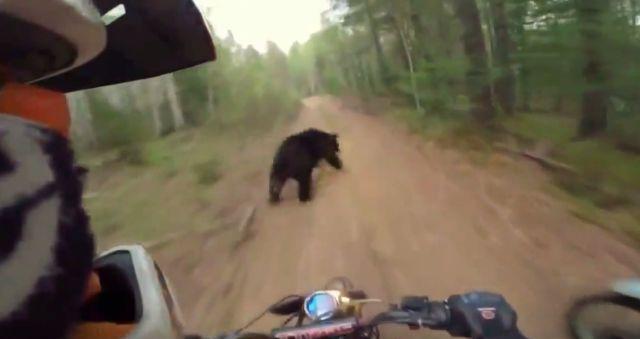 Trenutak od kojeg zastaje dah: Ruski motociklisti u bliskom susretu sa medjvedom (VIDEO)