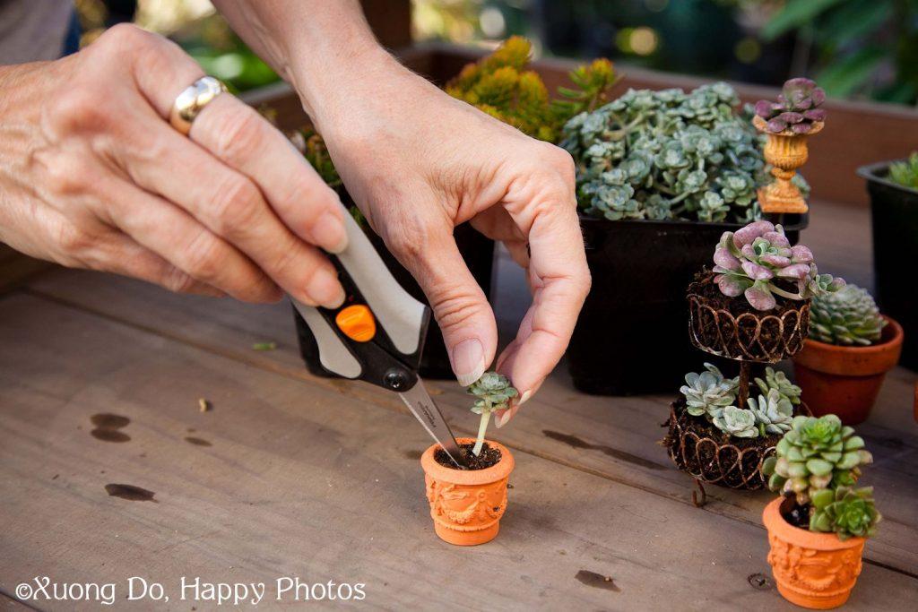 Planting-Succulents-3