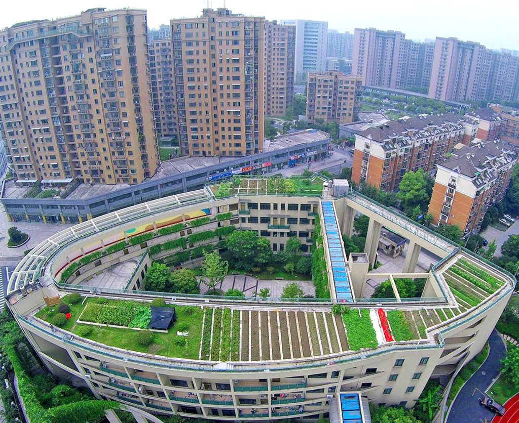Pujia-Primary-School-Rooftop-Farm
