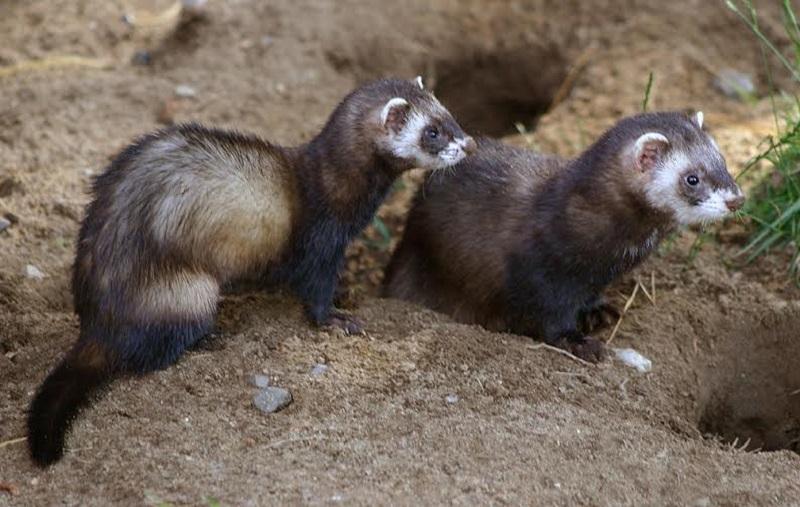Koje divlje životinje žive u Banjaluci i zašto