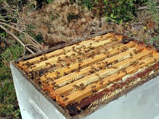 Istrenirao pčele da prave med iz marihuane (VIDEO)