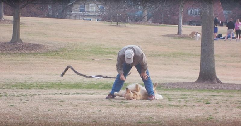 Legendarno: Pas se pravi mrtav jer neće da ide kući iz parka (VIDEO)
