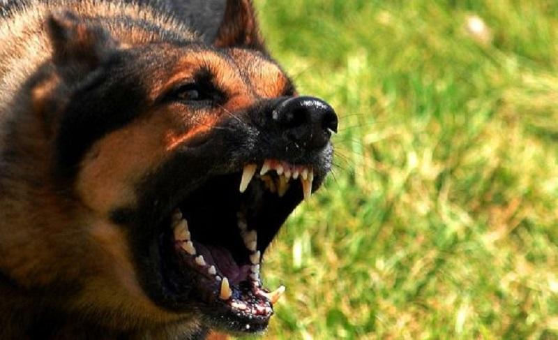 Sarajevo: Otac spasio sina iz čeljusti psa!