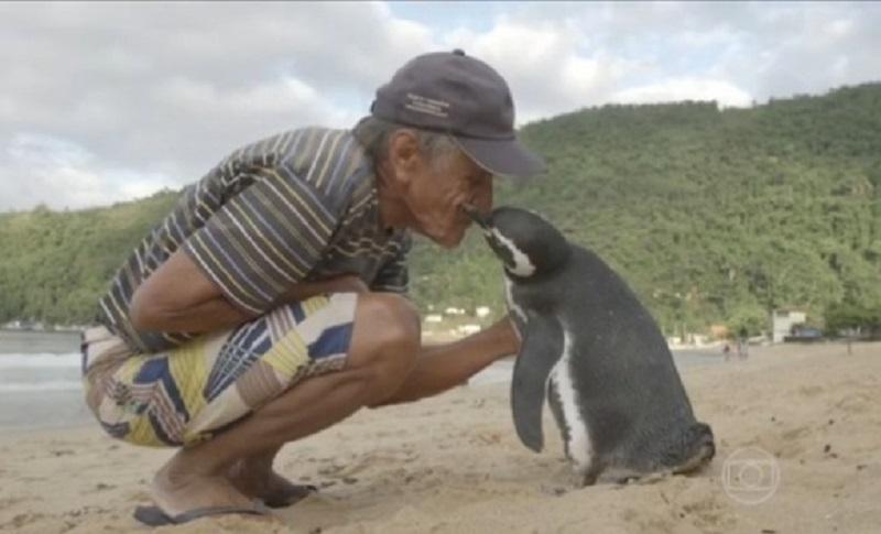 Pingvin svake godine dolazi da bi vidio starca koji mu je spasio život (VIDEO)