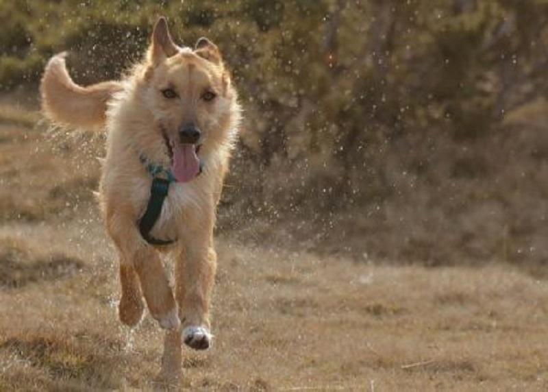 Pas spasio sedam života, a onda je umro