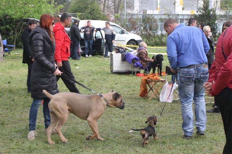 Izložba pasa na Akvani (FOTO)