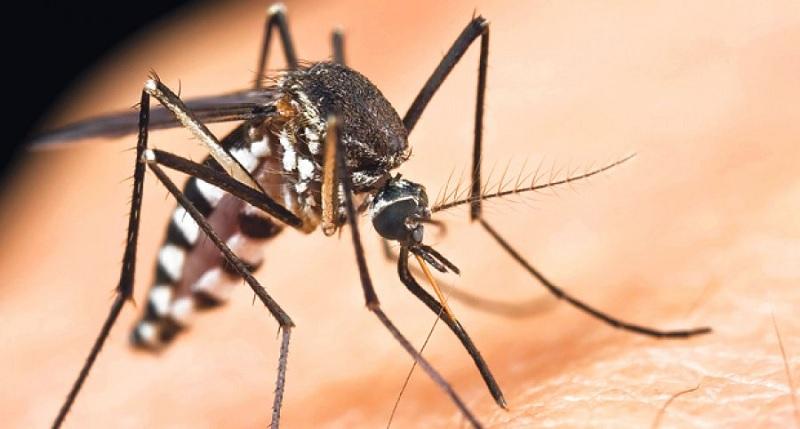 Tigrasti komarac pronađen u Banjaluci i još četiri grada u Srpskoj